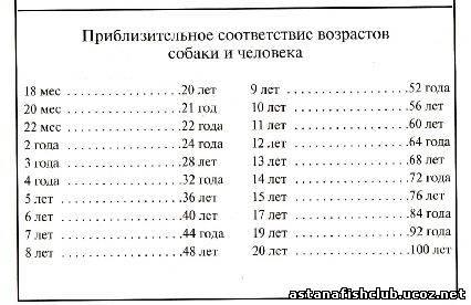 Сравнительная таблица возраста кошек и людей по этой таблице моей кошурке больше 88 лет